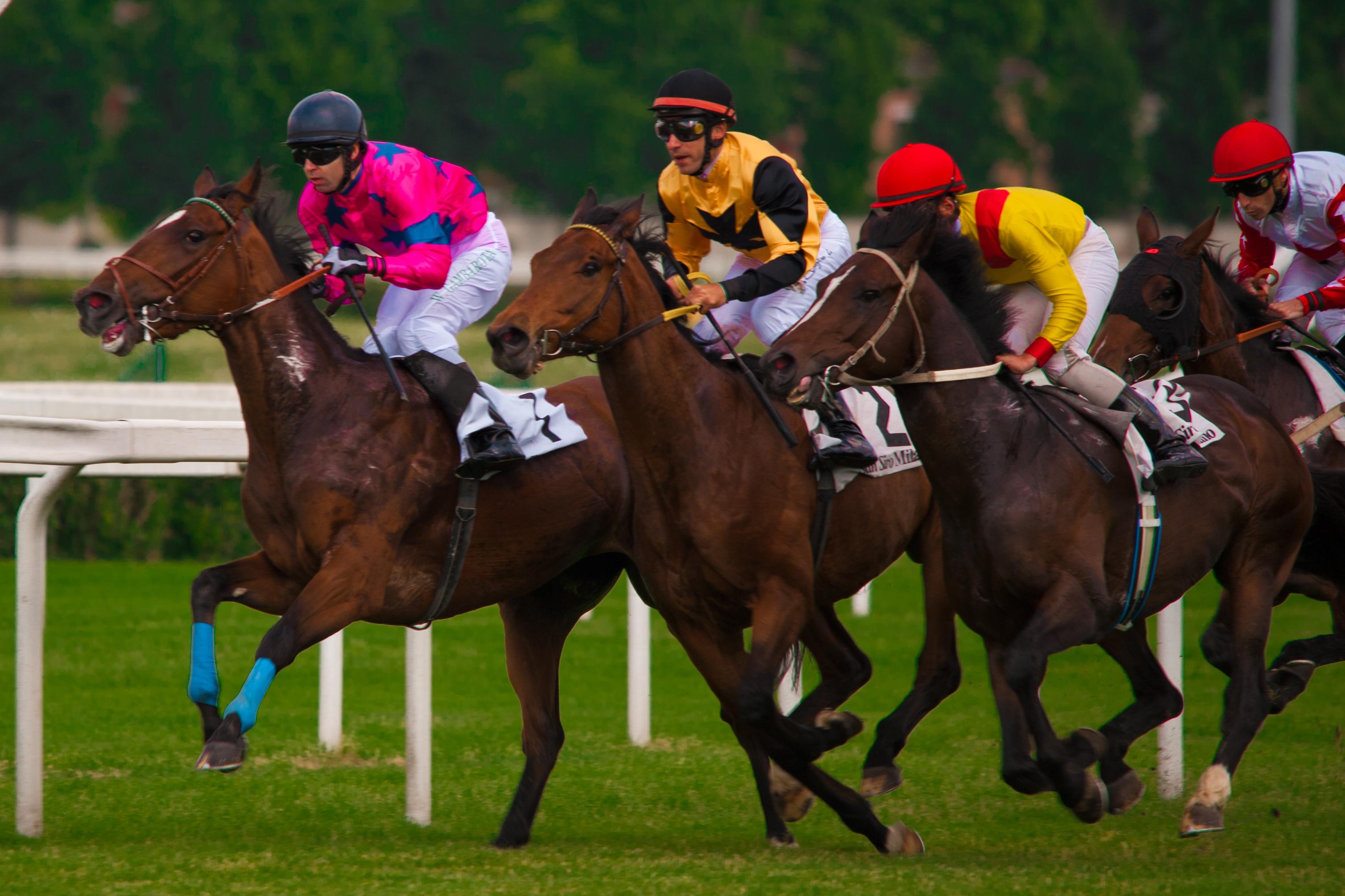 Corse Cavalli Milano Calendario.La Vita Di Un Cavallo Ippodromi Snai